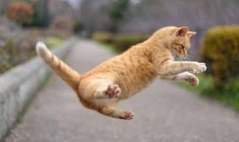 猫だまし戦法